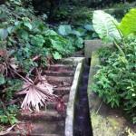 Hong Kong Victoria Peak Abandoned Staircase