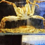 Attack of the Giant Crab in Hong Kong